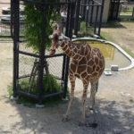 子連れでおでかけ 京都市動物園